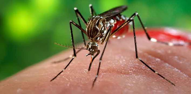 120 लोगों को जीका वायरस पॉजिटीव आया