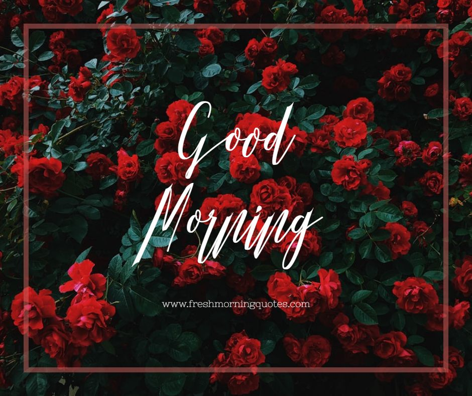 good morning images of rose