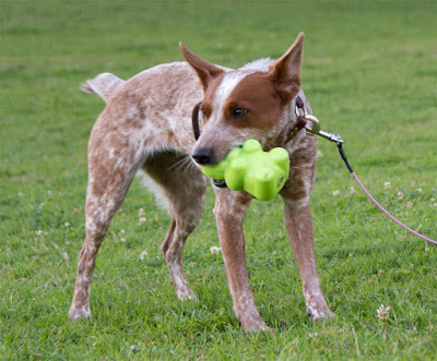 Durable chew toy made in the USA