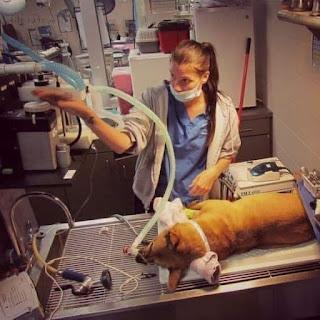 Denuncia de un veterinario