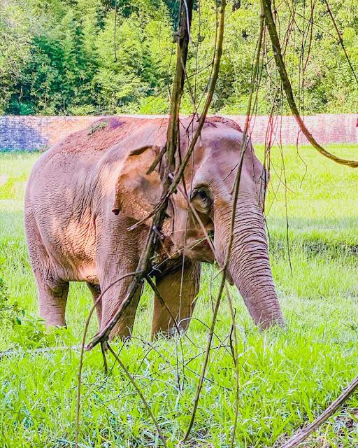 Parque Zoológico do Rio Grande do Sul - Sapucaia do Sul