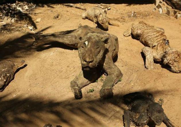 Khan Younis, Adalah Kebun Binatang Yang Paling Menyeramkan
