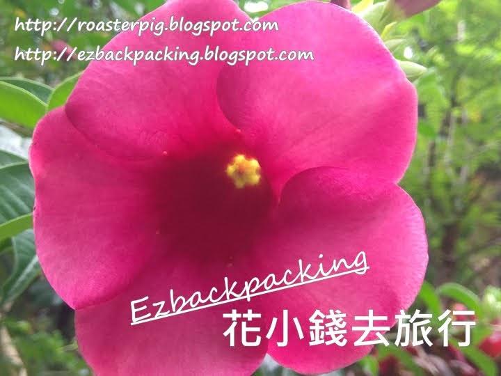 香港紫蟬花