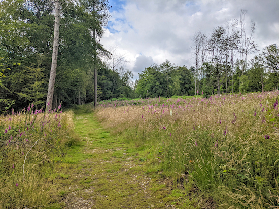 Great Gaddesden footpath 4 going through Hoo Wood