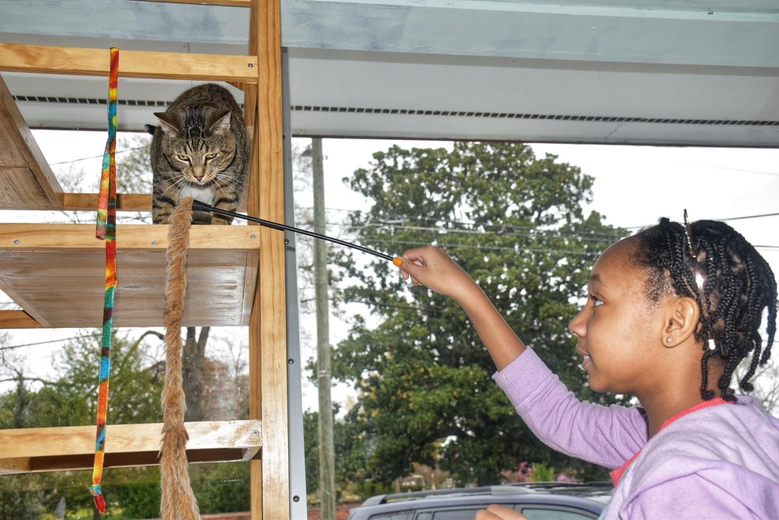 Java Cats Cafe Atlanta
