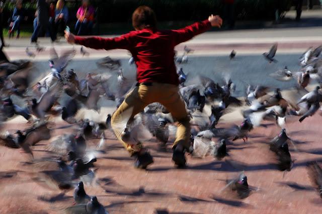 Europe pigeon