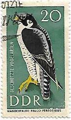 Selo Falcão-peregrino