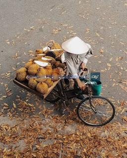 pedagang durian