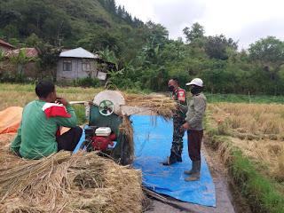 Turun Ke Lapangan Babinsa 01/kota Bantu Petani Rontokan padi