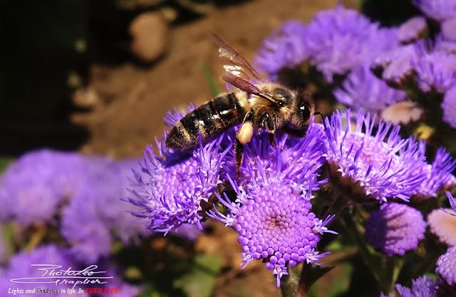 Bee Macro Photo