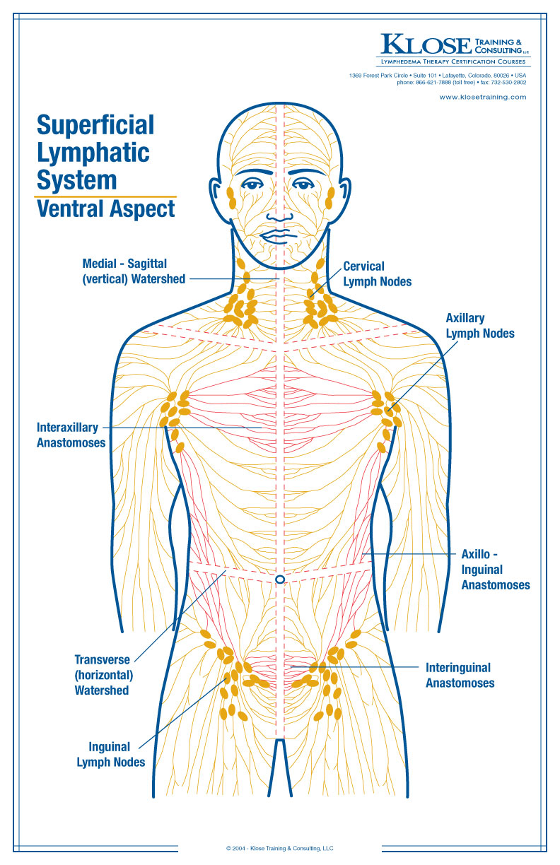 ... besides Arm Lymph Node Cancer. on diagram of lymph nodes in upper arm