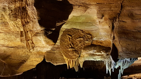 Raccoon Mountain Caverns - Cave Shield