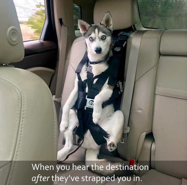 Yep, you can bet, we're going to the vet