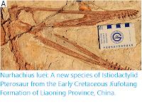 https://sciencythoughts.blogspot.com/2019/10/nurhachius-luei-new-species-of.html
