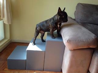 escada para cães buldog francês
