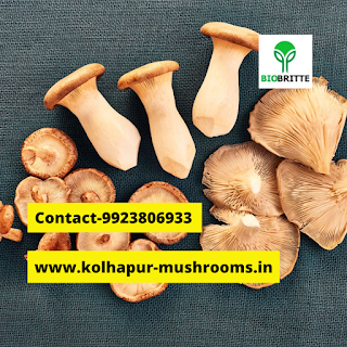 varieties of mushrooms are cultivated in India