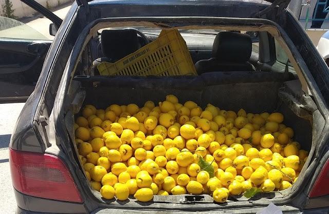 Τους τσάκωσαν με το πορτμπαγκάζ γεμάτο με λεμόνια