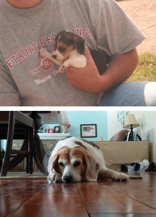 Primeras y últimas fotos de mascotas
