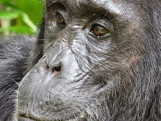 Rwanda Cultural Safaris - Cultural Heritage and Values in Rwanda