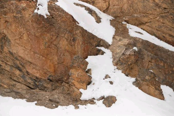 snow leopard camouflage Interesting facts