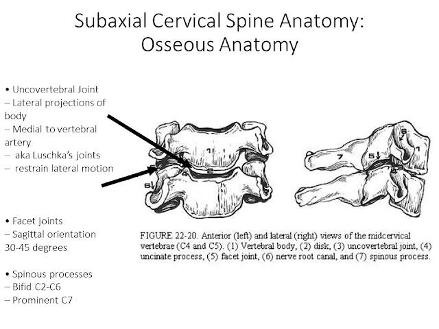 Anatomy of Cervical Spine and Cervical Spine Injuries