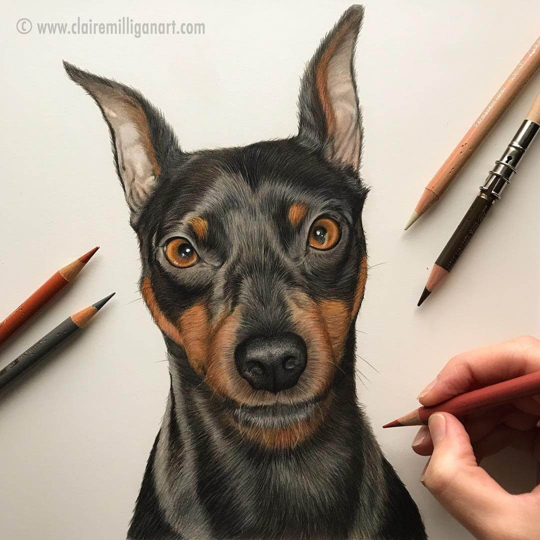 09-Max-the-Doberman-Claire-Milligan-Realistic-Color-Pencil-Animal-Portraits-www-designstack-co