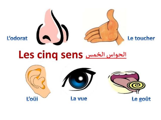 الحواس الخمس بالفرنسية