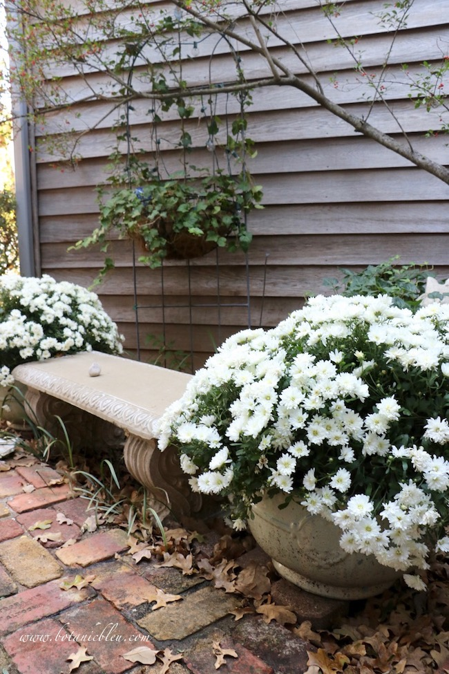 Fall Front Entry Garden With White Chrysanthemums each side of concrete garden bench