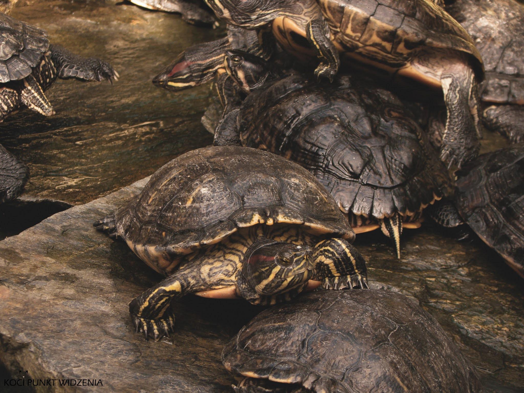 Zamek Książ Palmiarnia żółwie