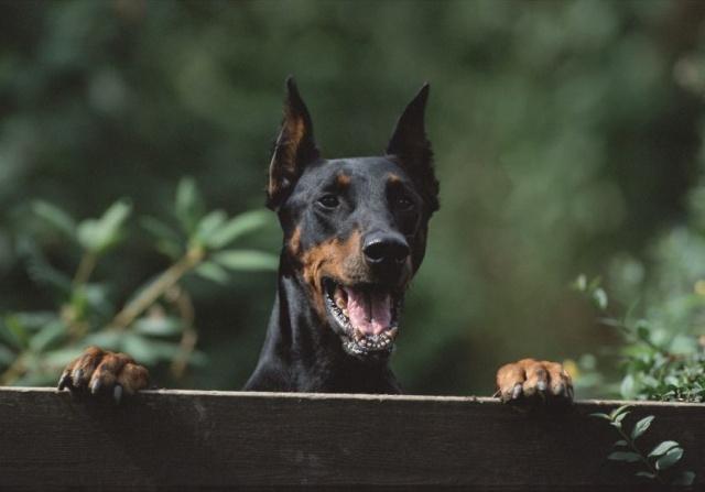Memelihara Anjing