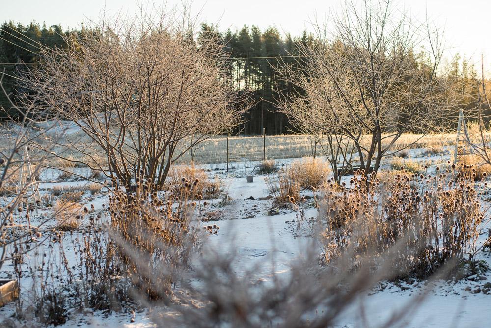 Talvisen potagerin ja puutarhan vaakakäytävä
