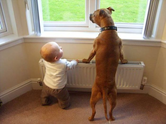 Cute dogs - part 209, funny dog photos, best cute dog image