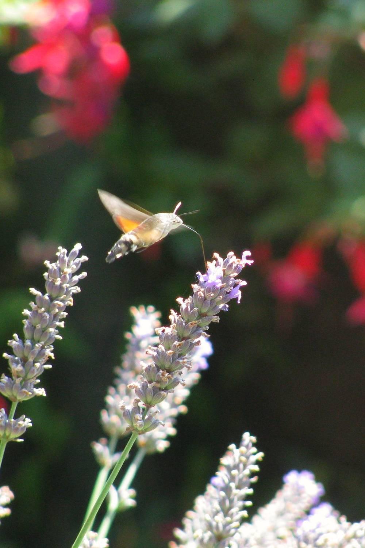 cronica vida simples passaros jardim auto ajuda sonia zagheto poesia coisas simples