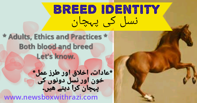 True Story - Breed Identity | newsboxwithazi