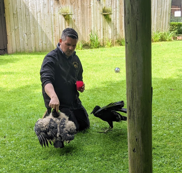 Kirkleatham Owl Centre Review  - flying displays
