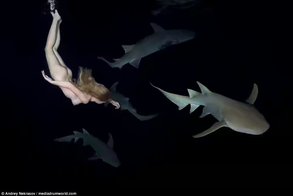 Irina Britanova-27-year -old model swims nake3d with sharks to prove that they're not as dangerous as humans believe