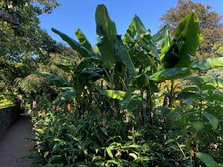 Overbecks tropical gardens