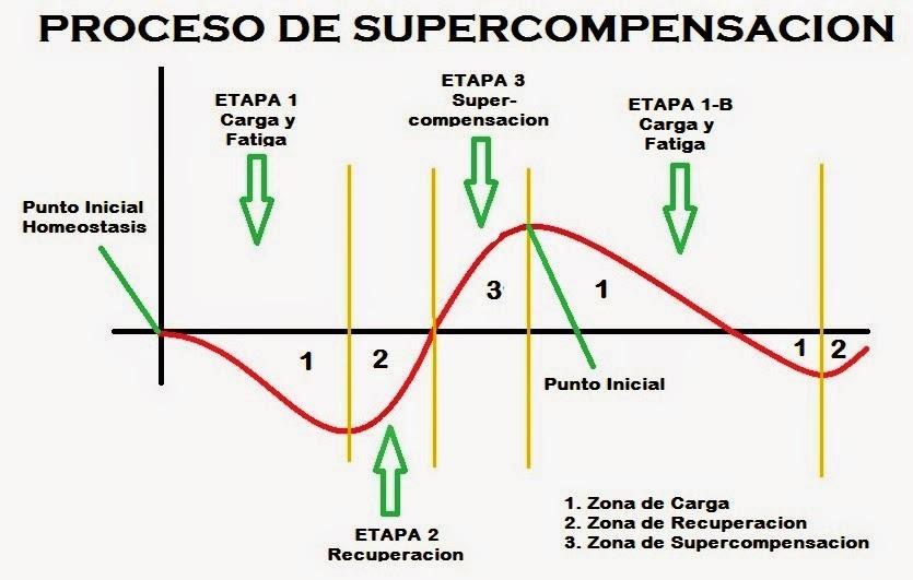 Respetar la supercompensación es clave para alcanzar los picos de forma, en la tabla se distinguen los procesos de carga, recuperación y supercompensación.