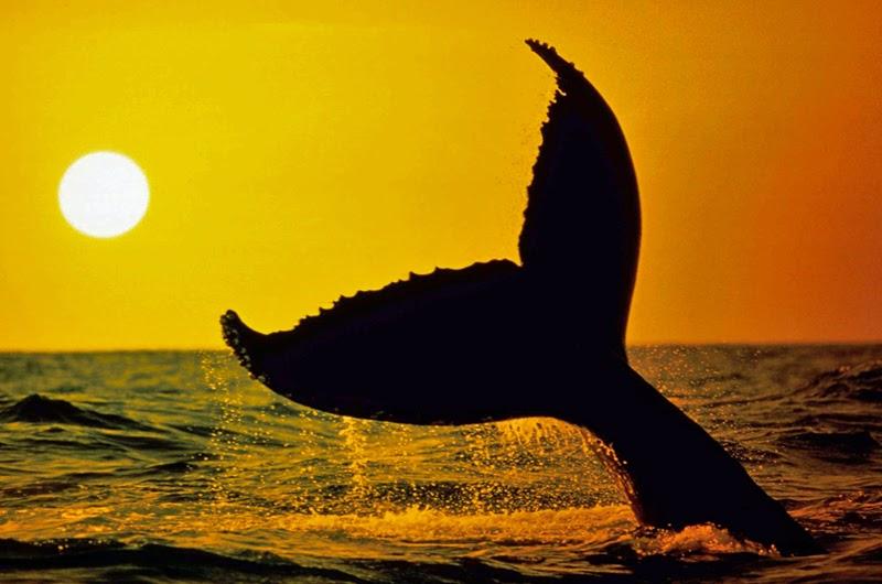 Internationaler Tag der Wale und Delfine | Gerrys Blog