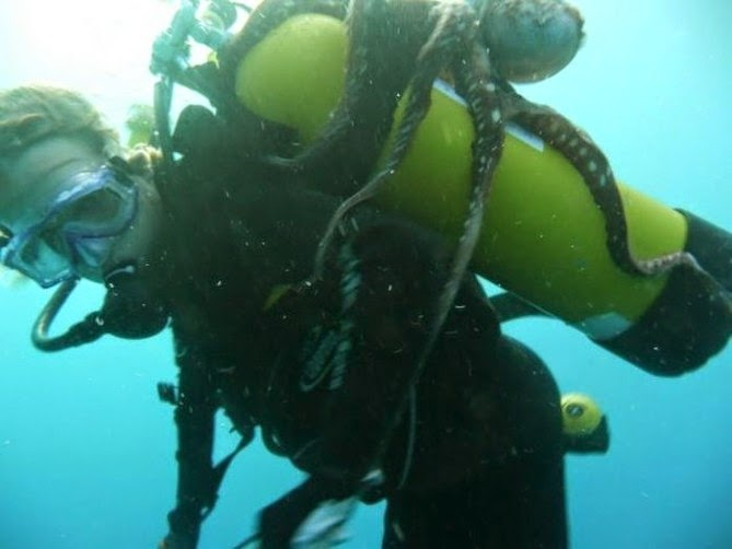 El ataque del Kraken- un pulpo ataca a un buzo