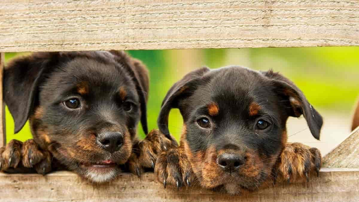 Problemas de pele em cães