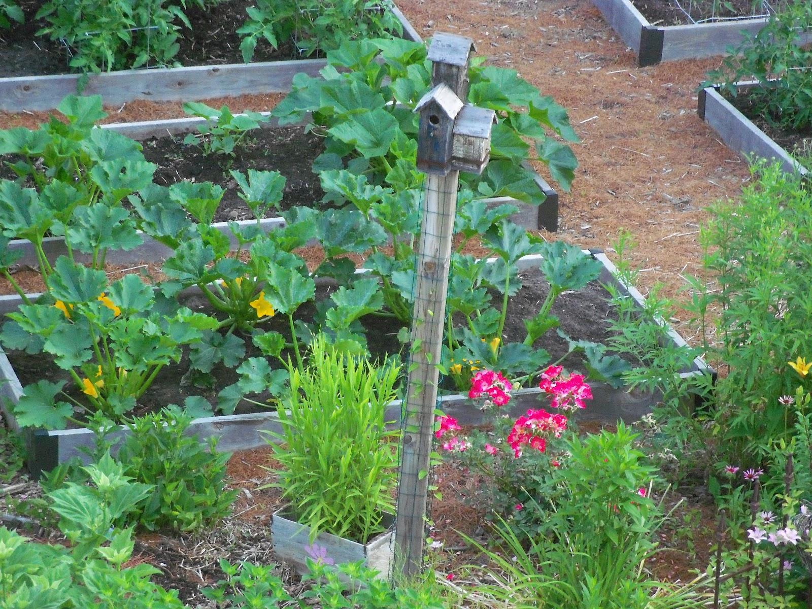 Win Giveaway Garden