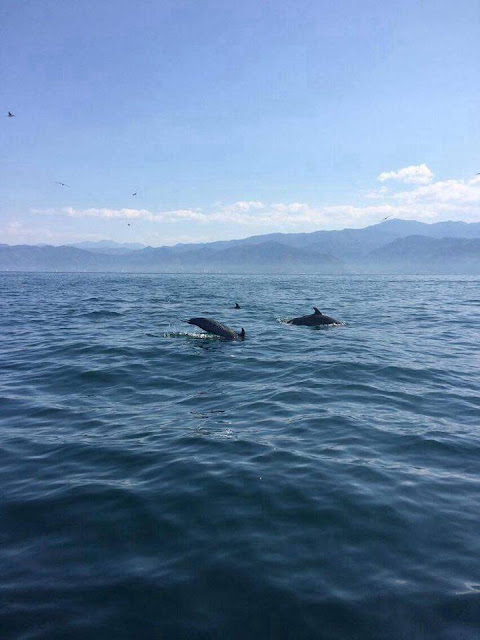 DAY OF DOLPHINS