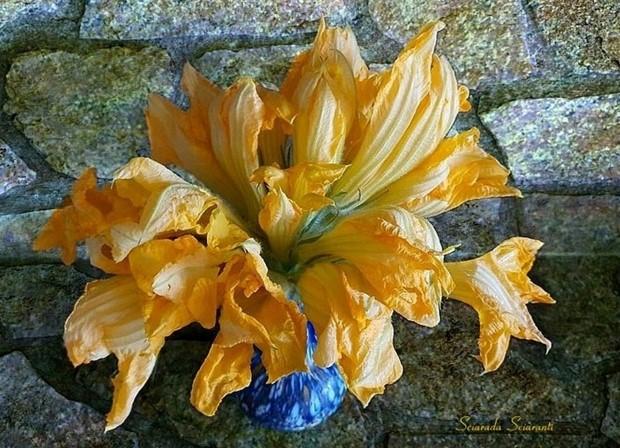 Vaso con fiori di zucca