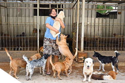 Meet the Indonesian doctor who has rescued more than 1,000 stray and abandoned dogs