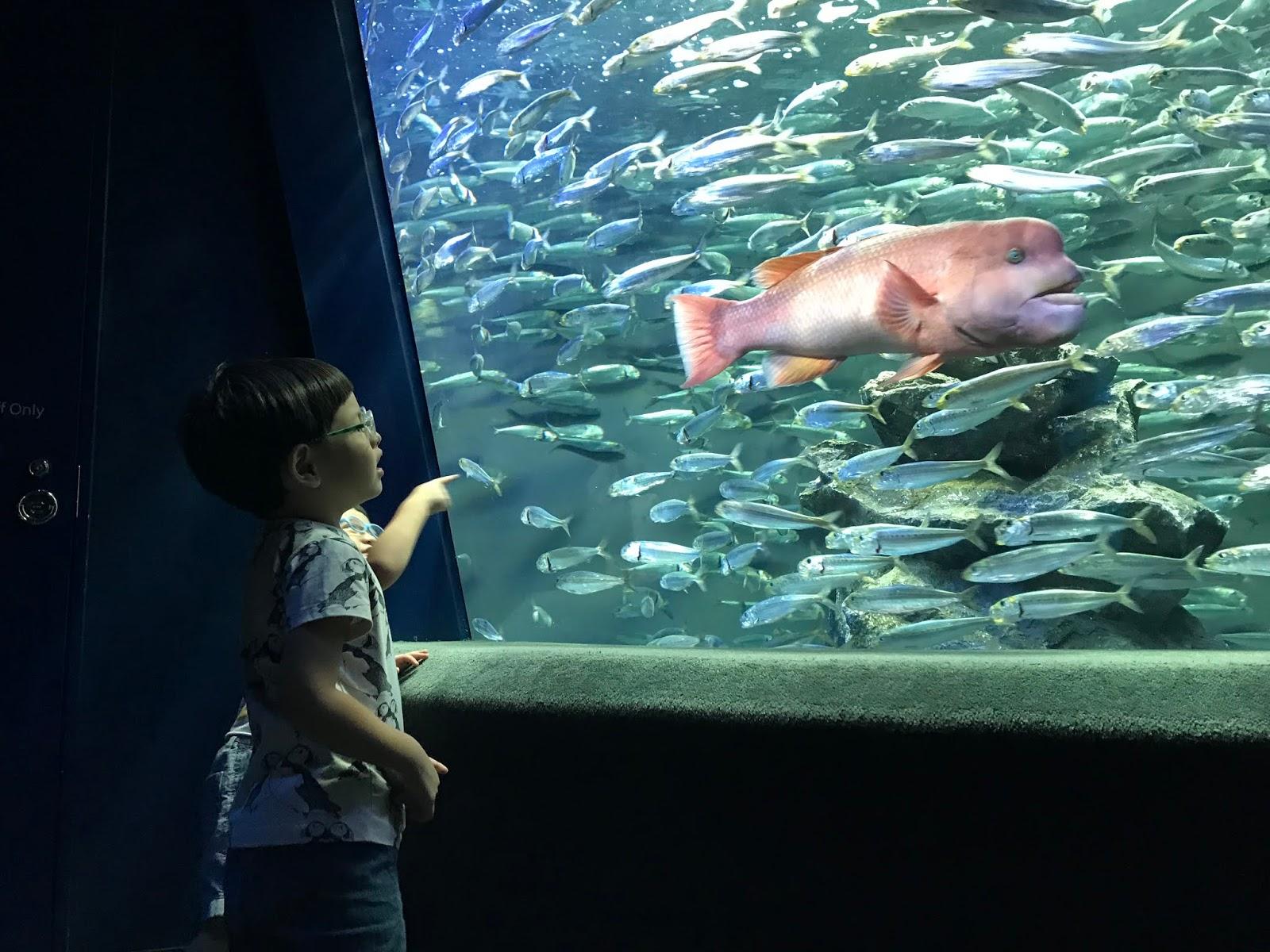 水族館 池袋