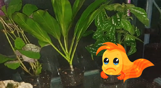 Cons of potted aquarium plants
