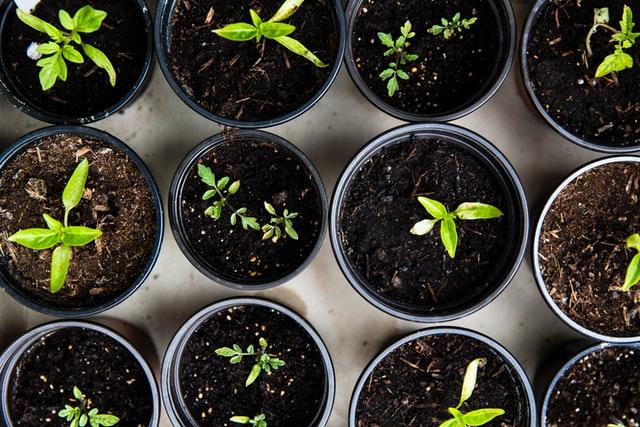 Gardening, Plants in pot,