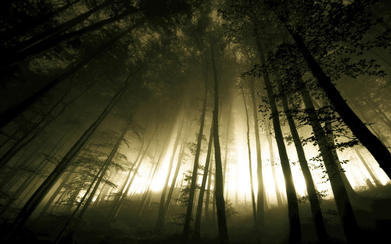 Dark Trees Hd Wallpapers: Dark Forest Fog Trees HD Wallpaper