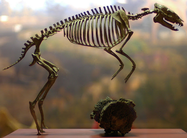 Tiny fossil horses put their back into it